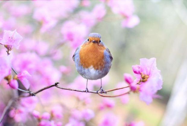 bird image 2